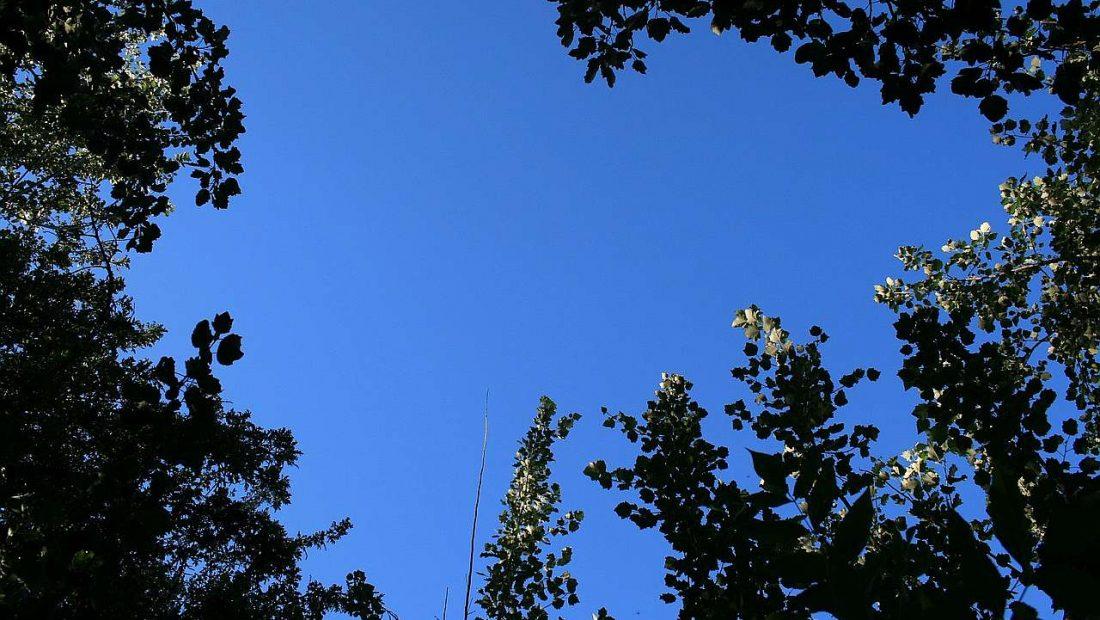 """Zu den Feierlichkeit """"85 Jahre Pappelstadion"""" hoffen alles ein blendendes Wetter"""