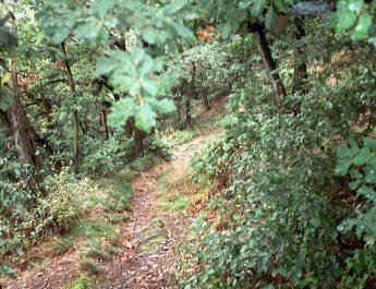 Der Rheinhöhenweg ist nicht nur für die TSG Irlich ein gerne genommener Wanderweg.