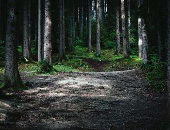 Die Wanderer der TSG Irlich lieben die Natur.