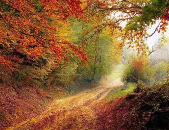 Ein ähnliches Bild erhoffen sich die Teilnehmer der Herbstwanderung von der TSG Irlich ebenfalls zu Gesicht zu bekommen.