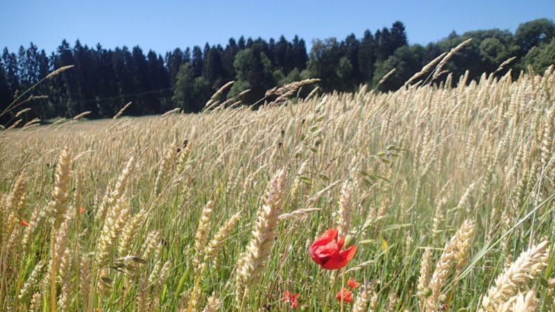 Bei der diesjährigen Herbstwanderung rund um Irlich und Hüllenberg hoffen alle Teilnehmer auf ähnlich schöne Anblicke.